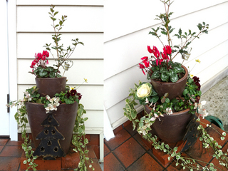 flower20111109.jpg